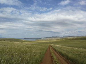 The steppe wild walk